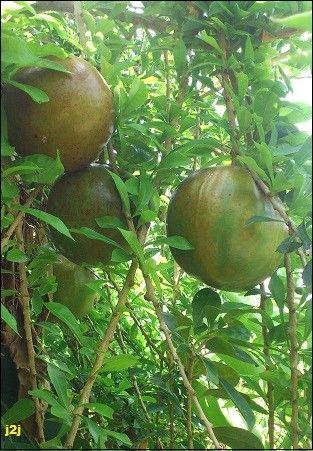 http://cuisine2jacques.c.u.pic.centerblog.net/05a2f57e.JPG