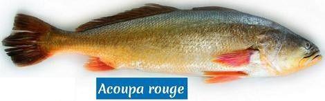 http://cuisine2jacques.c.u.pic.centerblog.net/ad5aa133.jpg