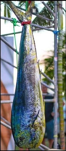 http://cuisine2jacques.c.u.pic.centerblog.net/da787a1a.jpg