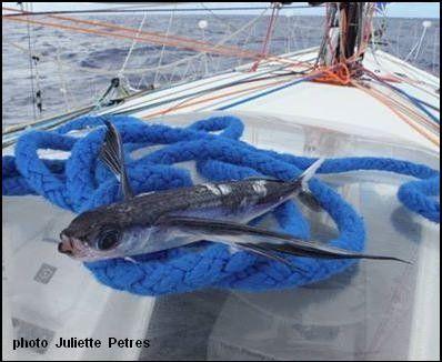http://cuisine2jacques.c.u.pic.centerblog.net/f99bd636.jpg